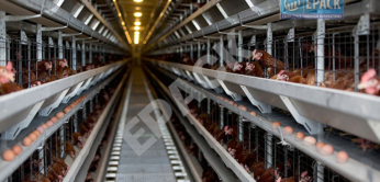 Top Poultry Shed Company