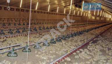 Prefabricated Poultry Sheds