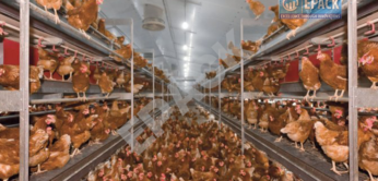 Poultry-Shed Manufacturer